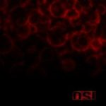 Cover - O.S.I. – Blood