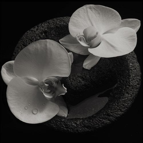 Mike Patton & Jean-Claude Vannier - Corpse Flower - Cover